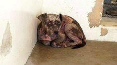 Hartley's former owners surrendered her because they couldn't afford her vet care. Why did they let this continue?