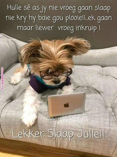 Do not disturb: Genius at work trying to solve a very challenging problem: Goeie Nag, Afrikaans Quotes, Good Night Sweet Dreams, Good Morning Greetings, Good Night Quotes, Special Quotes, Cat Gif, Yorkshire Terrier, Yorkie