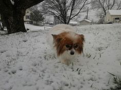 Haley in the snow