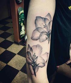 X ray gladiolus