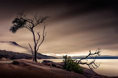 Another tree on a rock Tasmania, Sunrise, Country Roads, Rock, Water, Travel, Outdoor, Gripe Water, Outdoors