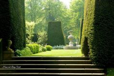 Sunlight among the topiaries