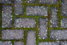 Bikarbonat i trädgården   Hemmets Dina, Bra Hacks, Garden Inspiration, Gardening Tips, Diy And Crafts, Life Hacks, Pergola, Projects To Try, Backyard