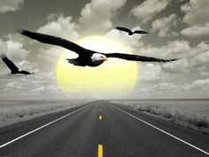 Eagle Eagle