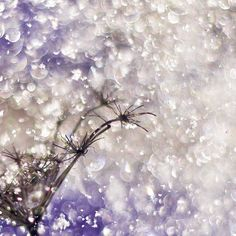 Abstract white and purple decor, Snow, Cream amethyst sparkle flower photography print $15