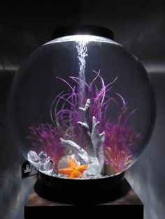 Animal - BiOrb and Fish Stuff Biorb If you want to get created you can cut, paste, and add extras to Biorb Aquarium, Aquarium Setup, Home Aquarium, Aquarium Design, Aquarium Fish, Biorb Fish Tank, Plant In Glass, Fish Tank Design, Fisher