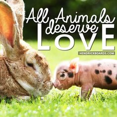 All animals deserve love :)  https://www.facebook.com/photo.php?fbid=657664820934831&set=a.247331921968125.66084.238220526212598&type=1&theater