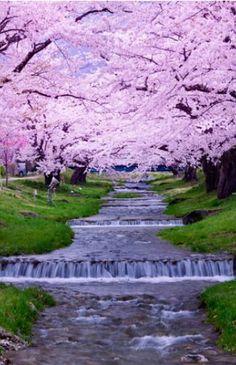 Tohoku - Japan