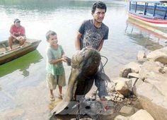 Pescador captura un manguruyú de 80 kilos en el río Paraná - Edicion Impresa - ABC Color. Paraguay