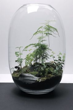 Creating a terrarium fairy garden is a fun and inspiring project for every ages, gather together families, siblings, best connections and solo gardeners!. #diyterrariumdoor, #terrariumideasplants, #diyterrariumdirections, #smallterrariumideas, #diyterrariumbox