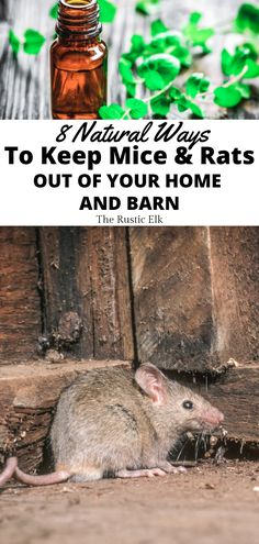 Mice and rats can be a real problem, especially in rural areas and on the farm and homestead. Learn 8 simple, natural ways to repel these critters from your home and property. Diy Home Repair, Urban Homesteading, Backyard Farming, Skills To Learn, Rural Area, Homestead Survival, Pest Control, Mice, Rats