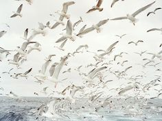 seagulls fly over the seashore