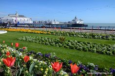 The vibrant Carpet Gardens next to #Eastbourne #Pier. Taken by Mark Huntley www.markhuntley.co.uk