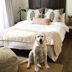 #Regram from @wendybellissimo - Maverick modeling for my new line of custom window treatments, pillows and bed scarves coming in August - almost here @smithandnoble. Over 130 WB designer fabrics and handwoven natural shades! #guestroom #bedroom #bedroomd