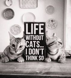 We pawsitively agree! #catslife