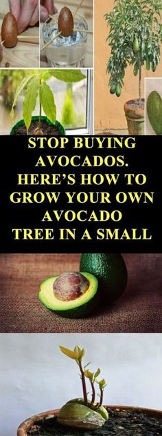 Unless you've been stranded on a deserted island for the past couple of years, you'll have noticed that avocados are everywhere! This little green fruit has been added to meals in almost every restaurant and home recipe possible