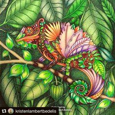 Feliz domingo à todos❣️ A inspiração de hoje fica por conta desse camaleão mais que perfeito  Estou apaixonada ❤️ ---------------------------------  Quer ter o seu desenho postado no nosso ig? Marque a tag #selvamagicaoficial --------------------------------- #oceanoperdido #jardimsecreto #selvamagica #selvamagicaoficial #florestaencantada #lostocean #secretgarden #enchantedforest #magicaljungle #colorindo #coloring #johannabasford #editorasextante