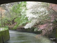 Under The Bridge in Cherry Blossom Park photo by Virginia Varela