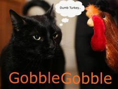 Dumb turkey... |||| And then visit OUR site at http://www.whiskerstailsandferals.org and FB page at https://www.facebook.com/pages/Whiskers-Tails-and-Ferals/165066516402
