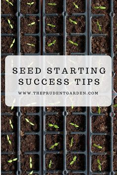 Starting seeds in your garden is an attractive and cheaper option to grow your favorite plants but to do this successfully you'll need to learn some seed starting tips!