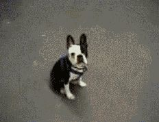 """I got The """"it's Thursday, let's try new things"""" hump!! We Know Which Dog Hump GIF You Need To See Based On Your Favorite Day"""