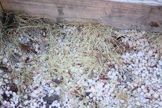 diy weed killers tested , gardening, gardening pests, go green, how to, vinegar salt soap weed killer