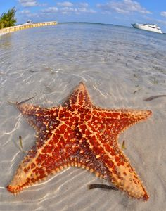 Starfish Beach, Grand Cayman (near Cuba)