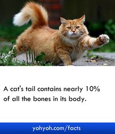 A Funny Fact About Cat Tail