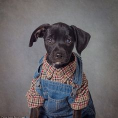 Levi was the product of an accidental litter. He was handed over to the rescue shelter bec...