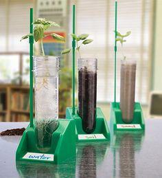 #hydroponicsystem grow tent