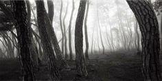 배병우 소나무