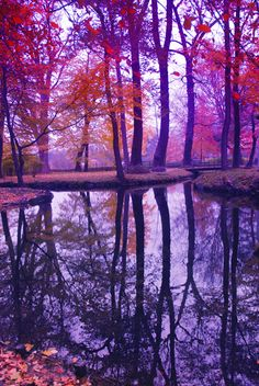 Amazing Lavender Fall Colors