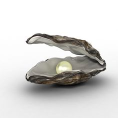Oyster Shell Helps Support Egg Shell High In Calcium