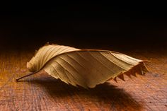 Dry Leaf On Wooden Table