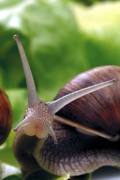 I love #snails. <3 They are the most peaceful creatures.