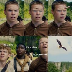 maze runner memes - Google Search