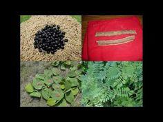 Medicinal Rice B4 Formulations for Isolepis Toxicity: Pankaj Oudhia's Me...