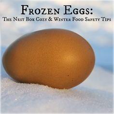 DIY Nest Box Cozy, prevent frozen eggs and learn what to do if eggs freeze.