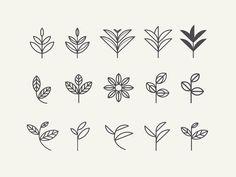 Leaf exploration for an organic tea re-branding I've been currently working on.     Finalized leaf is here.
