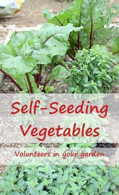 Self-seeding vegetables can provide next season's seedlings.