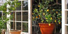 99 meilleures images du tableau entretien du jardin. Black Bedroom Furniture Sets. Home Design Ideas