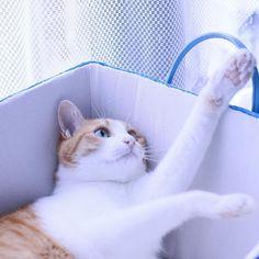 ripleyn:  アタックNO.1で #おはりぷちん !  だって涙が出ちゃう…男の子だもん!  #cat #catlovers #catstagram…