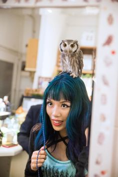 Owl cafe in Tokyo Japan, reservations, entry times opening hours. La Carmina…