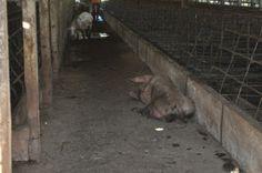 """""""O Grito do Bicho"""": DENÚNCIA: Animais vítimas de maus tratos são retir..."""