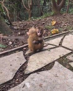 Cute Animal Videos, Cute Animal Pictures, Cute Little Animals, Cute Funny Animals, Cool Pets, Cute Dogs, Chien Golden Retriever, Cute Monkey, Cute Creatures