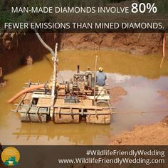 Diamonds made in a lab sparkle with the added benefits of avoiding the environmental destruction and social injustices linked to mining. Environmental Degradation, Social Injustice, Wedding Costs, Man Made Diamonds, Destruction, Lab, Wildlife, Sparkle, Wedding Expenses