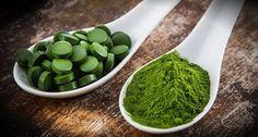 la  scelta  di nutrirsi  con un alga