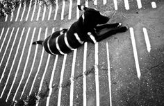 Alexey Bednij is a photographer who manipulates photos of people and animals in oder to make these unique shadow portraits that he refers to as 'collages'. Light And Shadow Photography, Dark Photography, Shadow Art, Shadow Play, Shadow Portraits, Street Art, Visual Texture, Chiaroscuro, Black And White Pictures