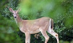 What to Do When You Encounter a Wild Animal #green #sustainability #rmogreen