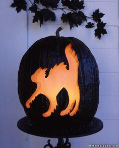 Black Magic Pumpkins
